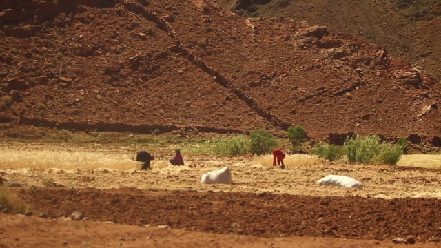 moroccan farmers hand harvesting wheat - wider - tradition stock videos & royalty-free footage