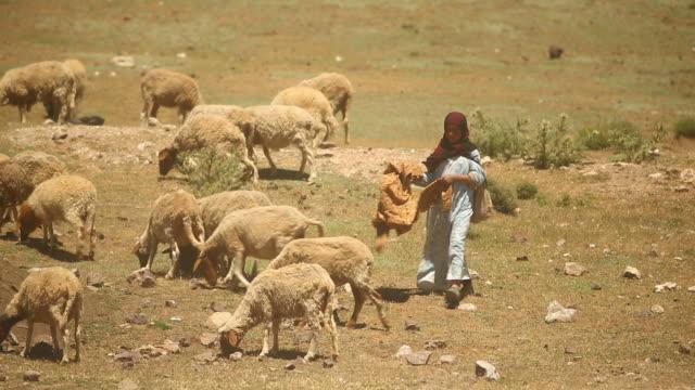 moroccan woman driving sheep - モデスト・ファッション点の映像素材/bロール