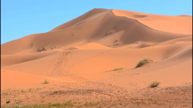 morocco sahara desert sand dunes in las palmeras area - 砂漠点の映像素材/bロール