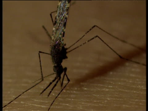 mosquito draws blood from human skin - 虫刺され点の映像素材/bロール