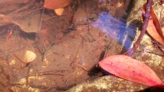 mosquito larvae - standing water mosquito stock videos & royalty-free footage