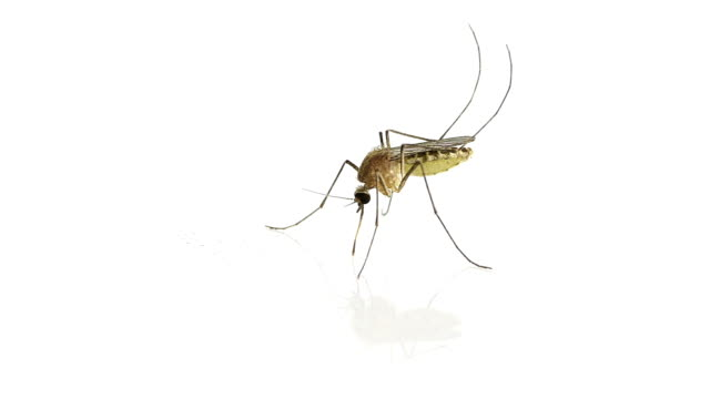 mosquito - mosquito stock videos & royalty-free footage