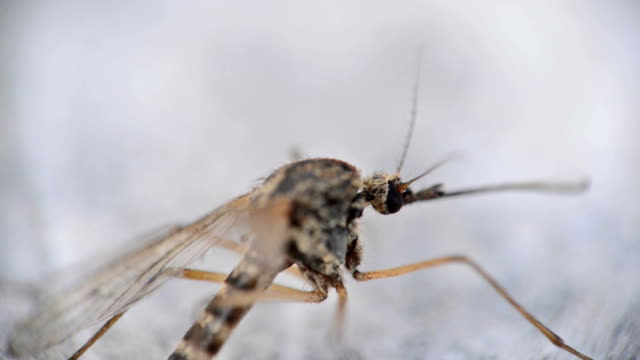 mosquito - mosquito stock videos and b-roll footage