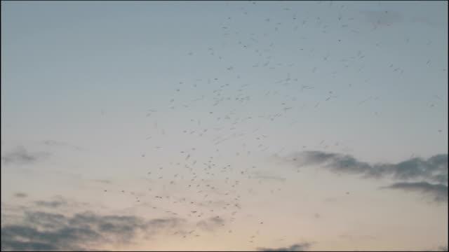 空を飛ぶ蚊 - 吸血性点の映像素材/bロール