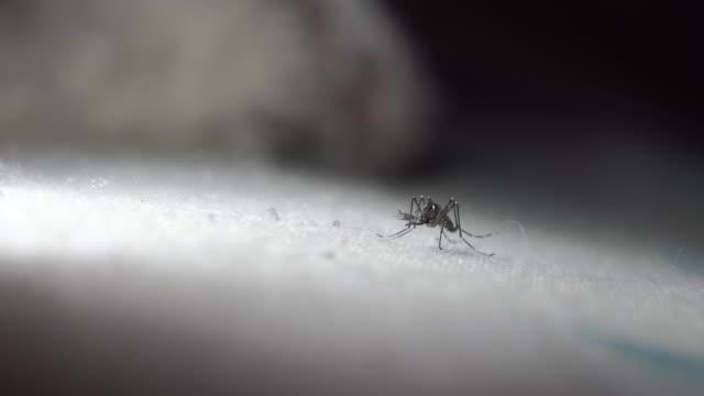mosquitoes holding on fabric close-up - 虫刺され点の映像素材/bロール
