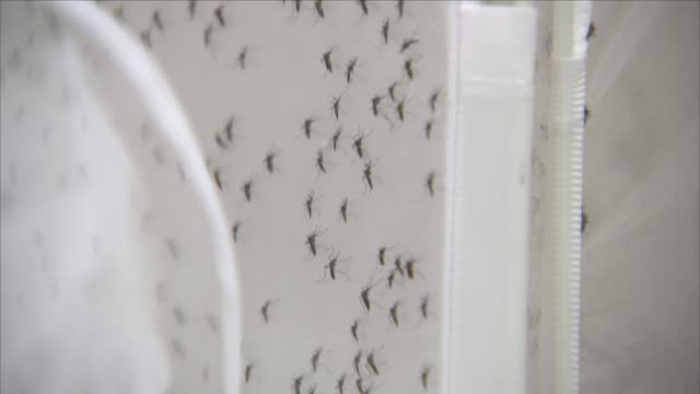 mosquitoes in a laboratory - epidemic stock videos & royalty-free footage