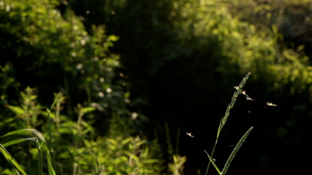 mosquitoes - mosquito stock videos and b-roll footage