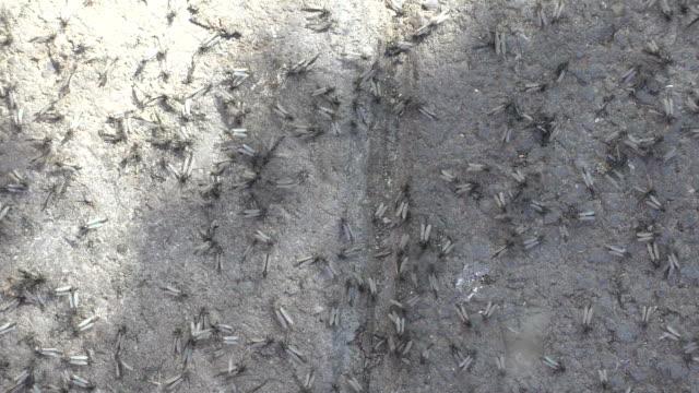 myggor - skadedjur bildbanksvideor och videomaterial från bakom kulisserna