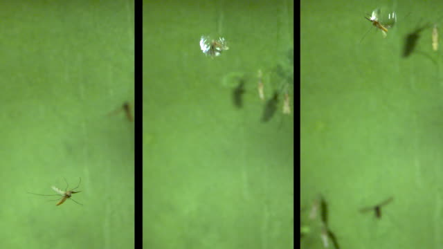 mosquitos hit by drops of water. - green background stock videos & royalty-free footage