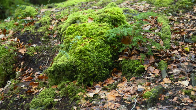 moss and fern with wilted leaves - moss stock videos & royalty-free footage
