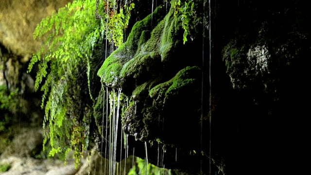 Moss and ferns with dripping water