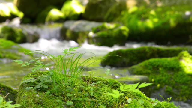 cu r/f moss and flowing water at sangdong valley / yeongwol, gangwondo, south korea - ruscello video stock e b–roll