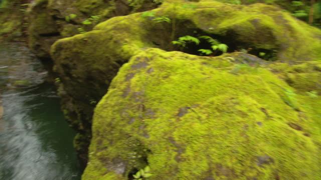 Moss and lichen grow on boulders along a creek.
