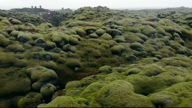 Moos-Abdeckung auf Vulkanlandschaft, Island
