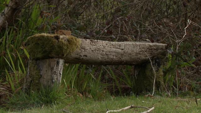 vidéos et rushes de moss covered bench made from a hewn log - séquoia géant