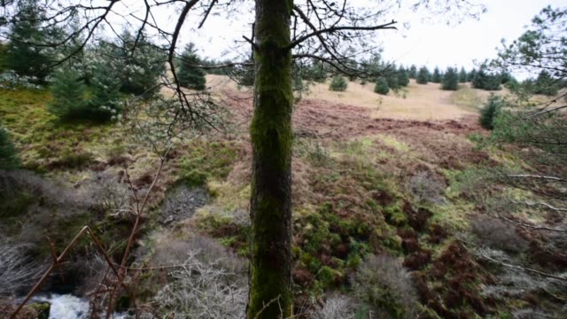 moss covered pine tree trunk.ayrshire. - david johnson stock videos & royalty-free footage
