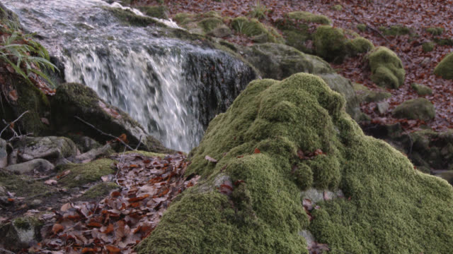 moss covered rock in front of a waterfall in scottish woodland during autumn - johnfscott stock videos & royalty-free footage