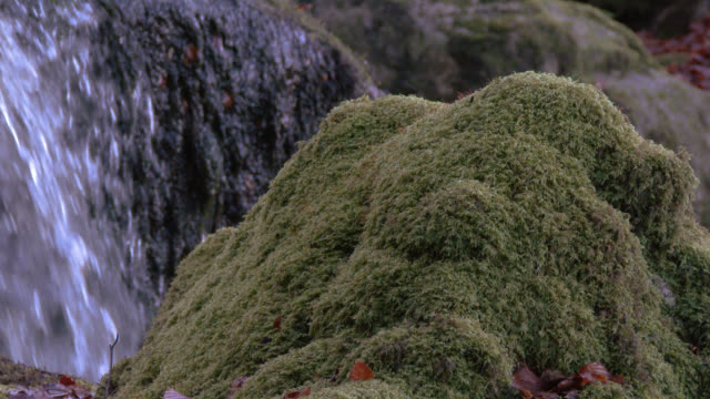 Moss covered rock in front of a waterfall in Scottish woodland during autumn