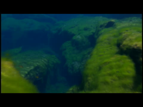 ms  pov moss covered rocks and fishes - scuba diver point of view stock videos & royalty-free footage