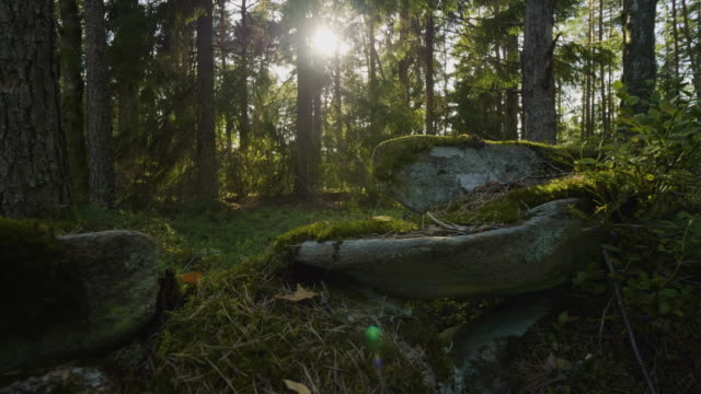 moss covered rocks in a lush forest - moss stock videos & royalty-free footage