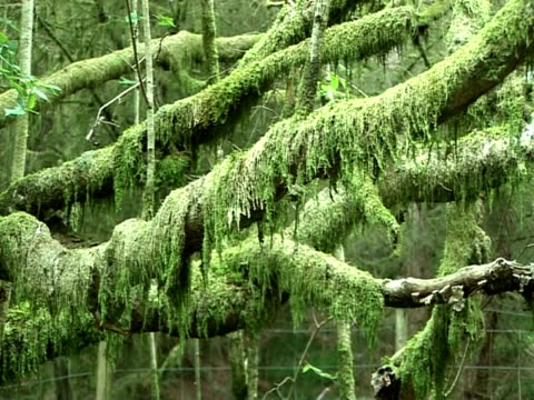 moss covered tree branches, south wales - 落葉樹点の映像素材/bロール