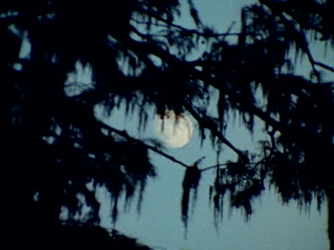 moss covered tree limbs in silhouette w/ moon bg. alligator moving through water in moonlight. alligator moving through water alligator back passing... - swamp stock videos & royalty-free footage