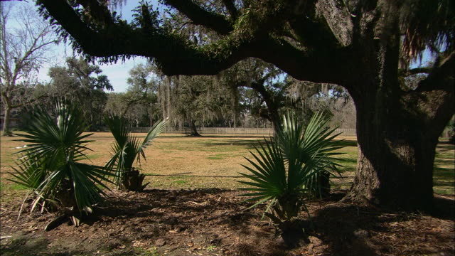 vídeos de stock e filmes b-roll de moss covered trees shade small palm trees in louisiana. - com sombra
