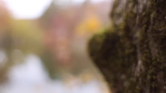 moss growing on tree coming into shallow focus - soft focus stock videos & royalty-free footage