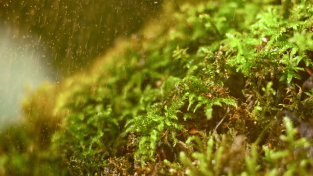 slo mo ld moss in a summer shower - moss stock videos & royalty-free footage