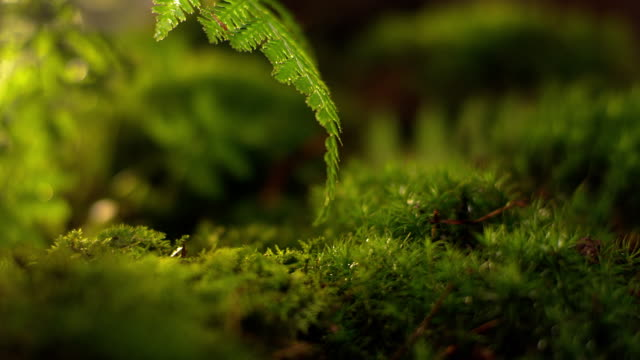 moss in forest - moss stock videos & royalty-free footage