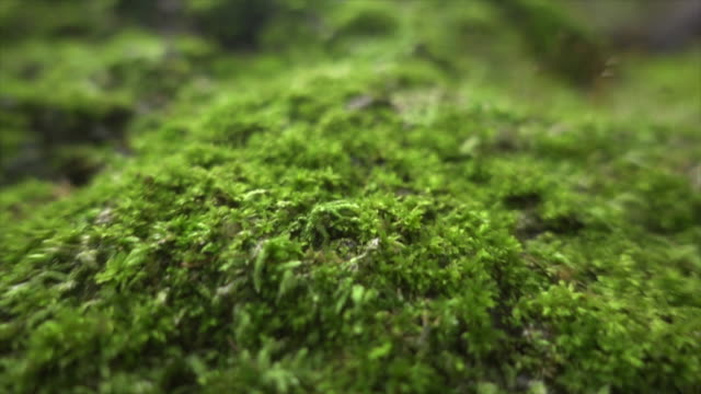 stockvideo's en b-roll-footage met moss in brede dolly shot super slow motion - macrofotografie