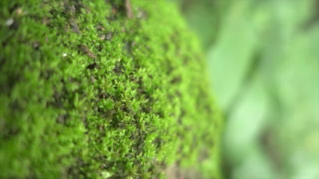 vidéos et rushes de mousse en dolly large coup super slow motion - mousse végétale
