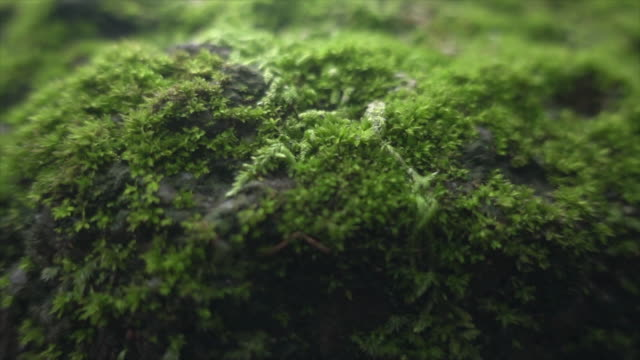 moss in wide dolly shot super slow motion - land stock videos & royalty-free footage