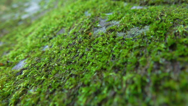 moss in wide dolly shot super slow motion - muschio video stock e b–roll