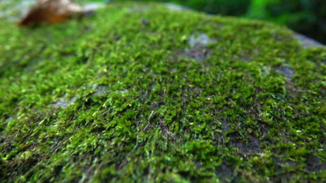 moss in wide dolly shot super slow motion - moss stock videos & royalty-free footage