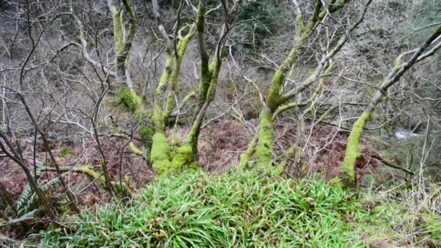 moss laden tree near the water of gregg - david johnson stock videos & royalty-free footage