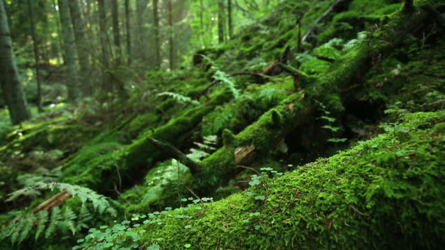 Moss on Dead Trees Tilt Up Shot