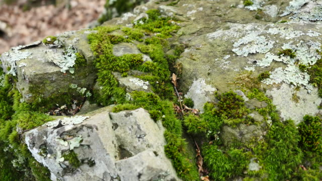 moss on rocks - moss stock videos & royalty-free footage
