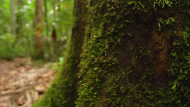 vídeos de stock, filmes e b-roll de moss on tree's branch - arbusto tropical