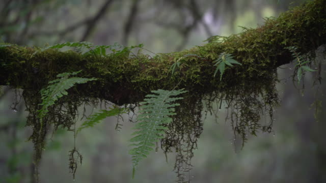 moss - tree trunk stock videos & royalty-free footage