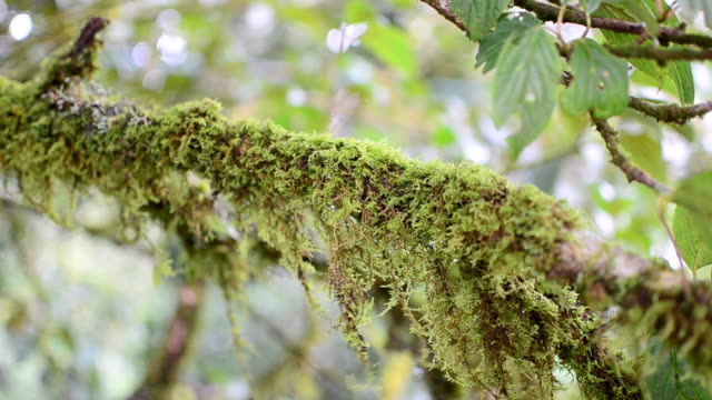 モス - 硬木の木点の映像素材/bロール