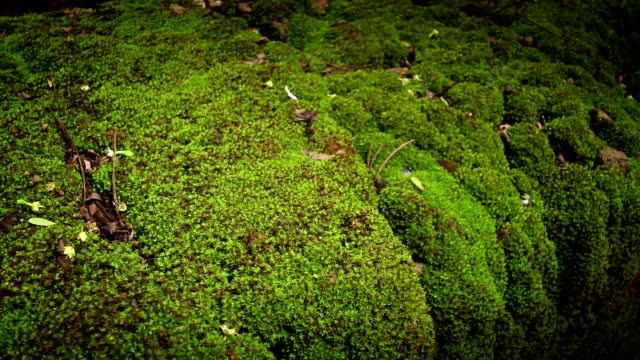 moss - wet stock videos and b-roll footage