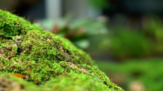 CU : Moss