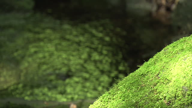 mossy rock and spring water, yamanashi, japan - spring flowing water stock-videos und b-roll-filmmaterial