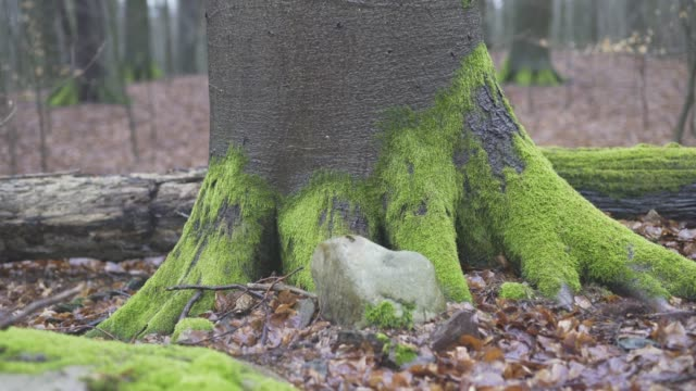 mossy stump surrounded by dead leaves - baden wurttemberg stock videos and b-roll footage