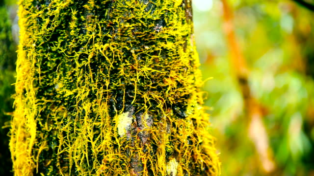 Mossy tree trunk in the forest