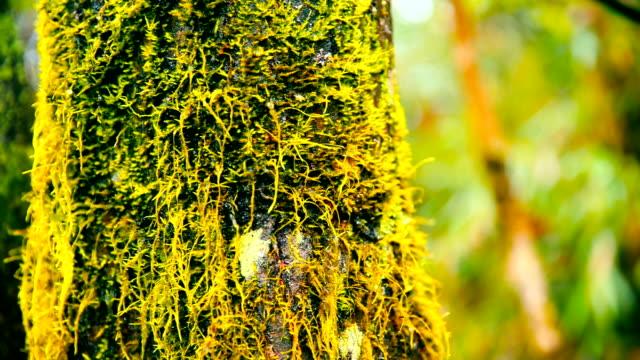 森のコケに覆われた木の幹 - コケ点の映像素材/bロール