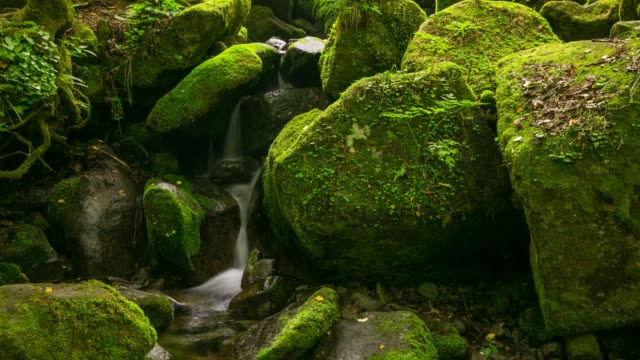 mossy valley in yeongwol-gun, gangwon-do province - muschio video stock e b–roll