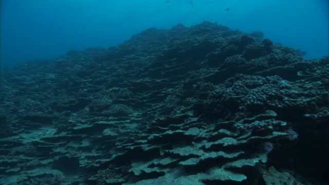 mostly dead coral reef, french polynesia - reef stock videos & royalty-free footage