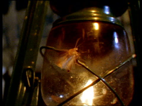 moth flies around lantern with flame at night - moth stock videos and b-roll footage